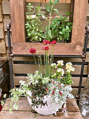 寄せ植え鉢の写真